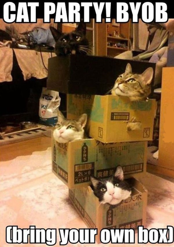 Cat Party, Bring Your Own Box
