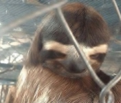sloth3