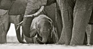 Elephant baby at waterhole