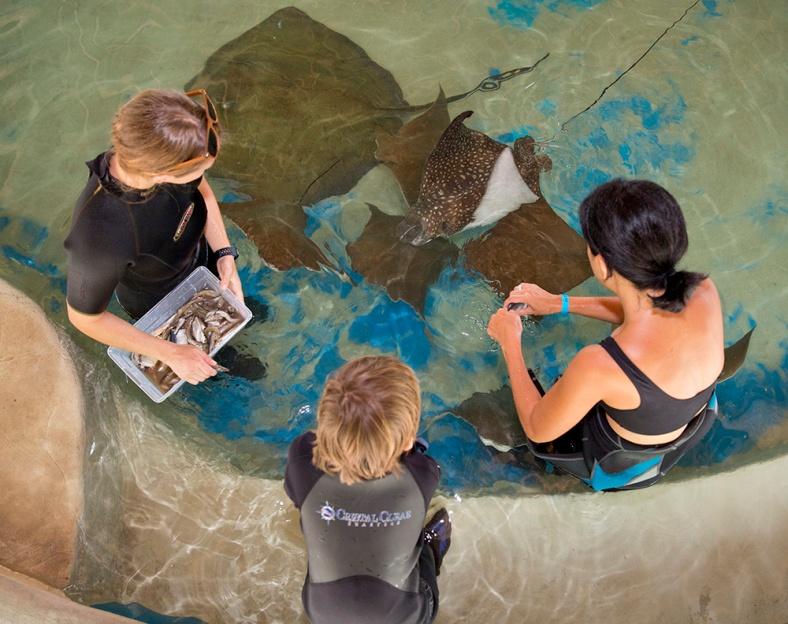 Keys Aquarium Encounters