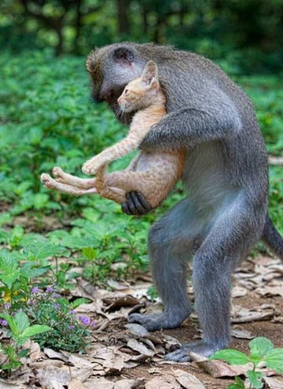 monkey-love-kitten-1-582x800