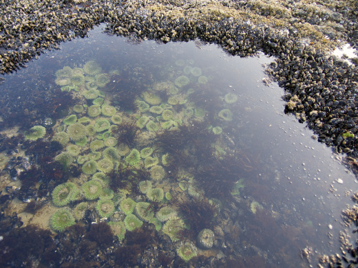 Anemone Pool