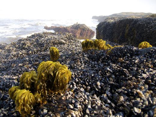 Seaweed Palms