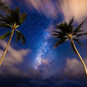 nightskypalms