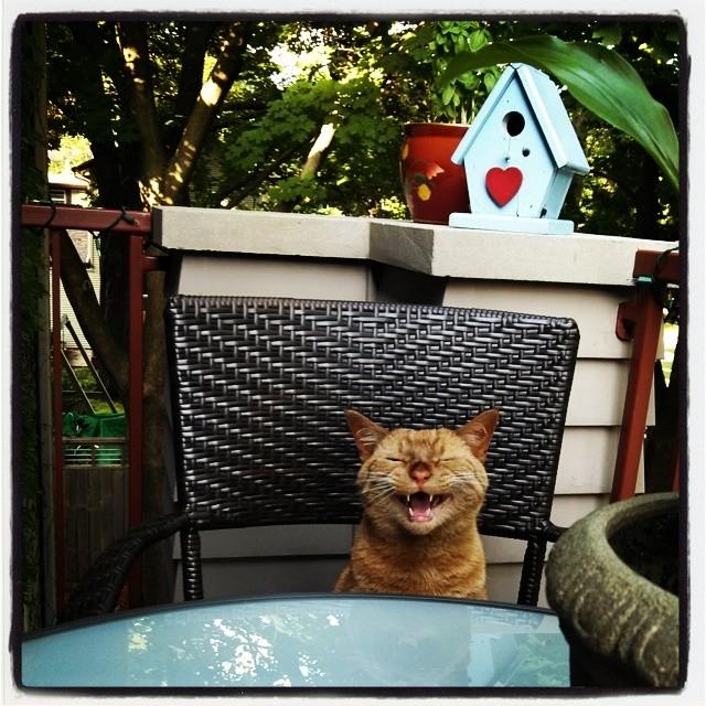 Piko Smile!