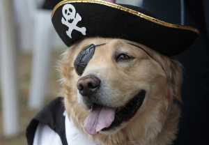 pirate-dog