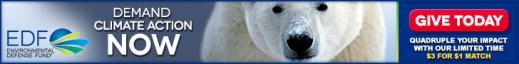 6-EDF_banners_bears_728x90_a