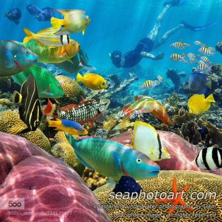 Man underwater swims in a colorful coral reef with tropical fish